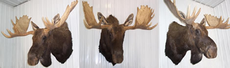 Taxidermy Plus